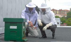 De jobbar för en bättre miljö på stadens tak